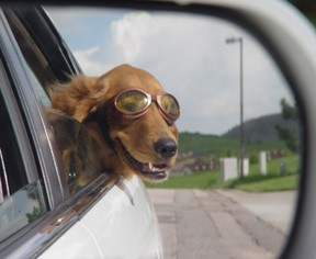 dog in car1.jpg