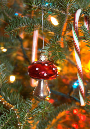Christmas Tree Origins And History