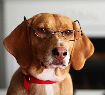 Pavlovs-Dog21.jpg