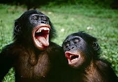bonobo3.jpeg