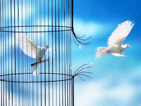 dove-cage.jpg
