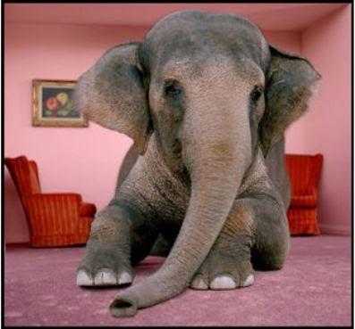 elephant-room1.jpg