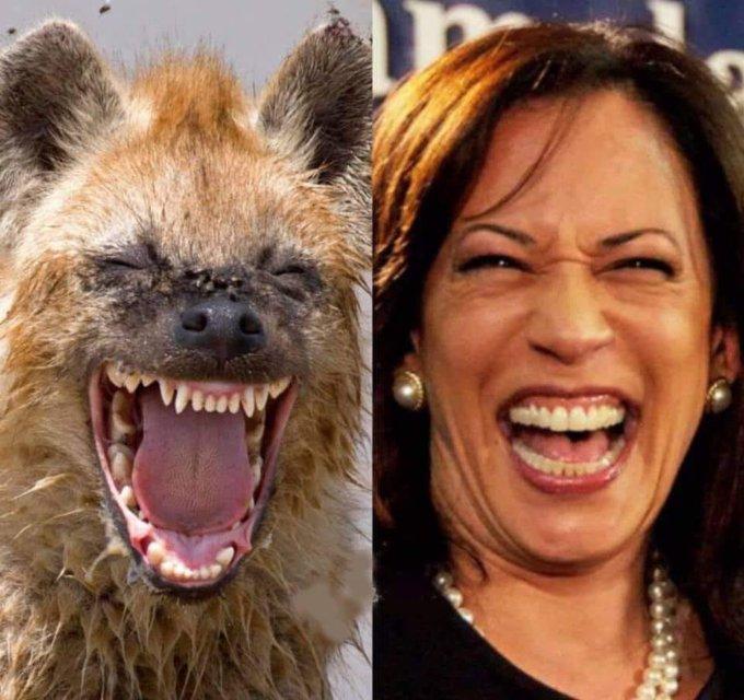 harris-hyena.jpg