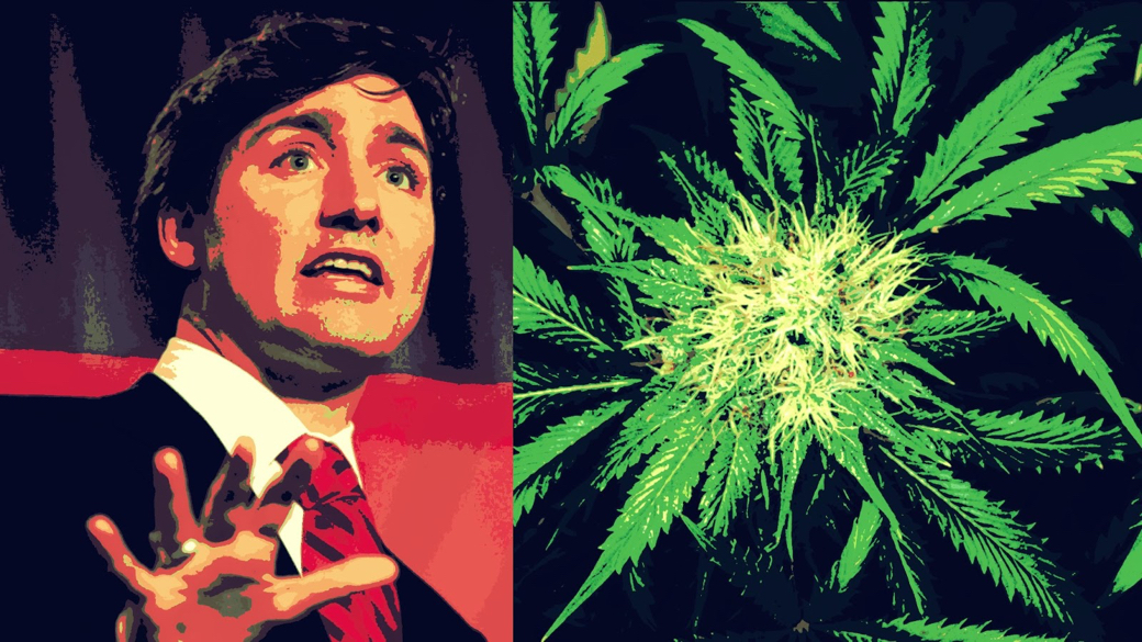 justin weed (1) (1).jpg