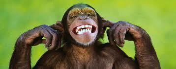 monkey55.jpg