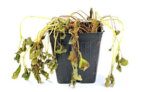 potted-plant-dying.jpg.838x0_q80_large.jpg