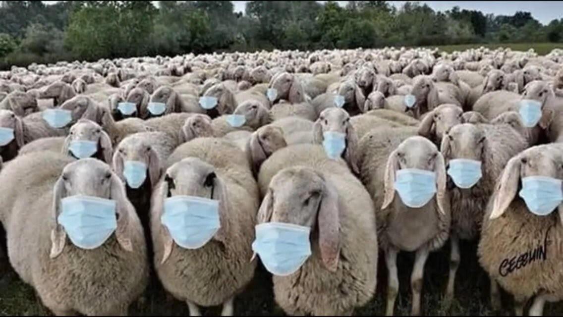 sheeple-masks.jpg