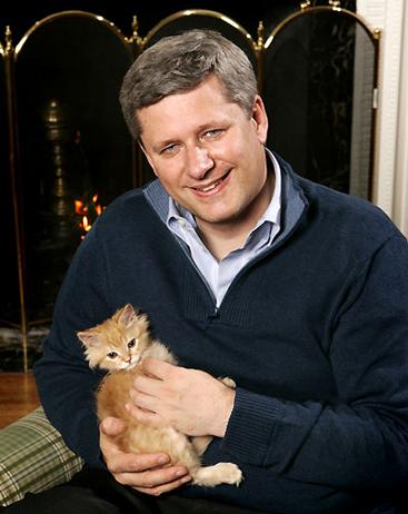strangles cat.jpg