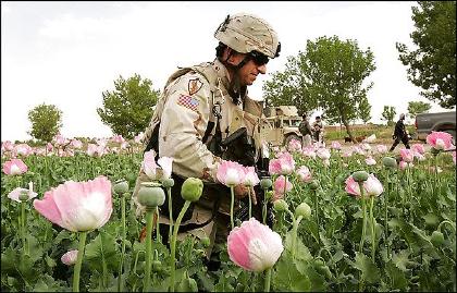 us-soldier-in-opium-field.jpg