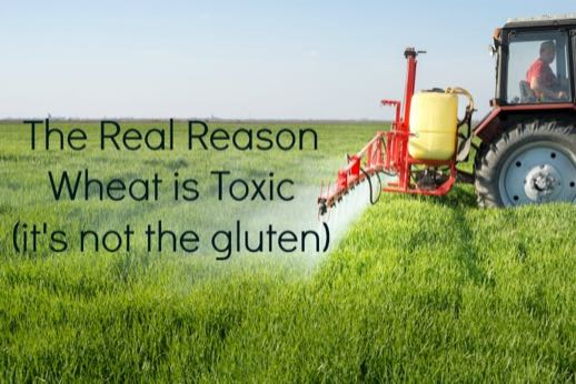 wheat-is-toxic-and-its-not-the-gluten_mini1.jpg